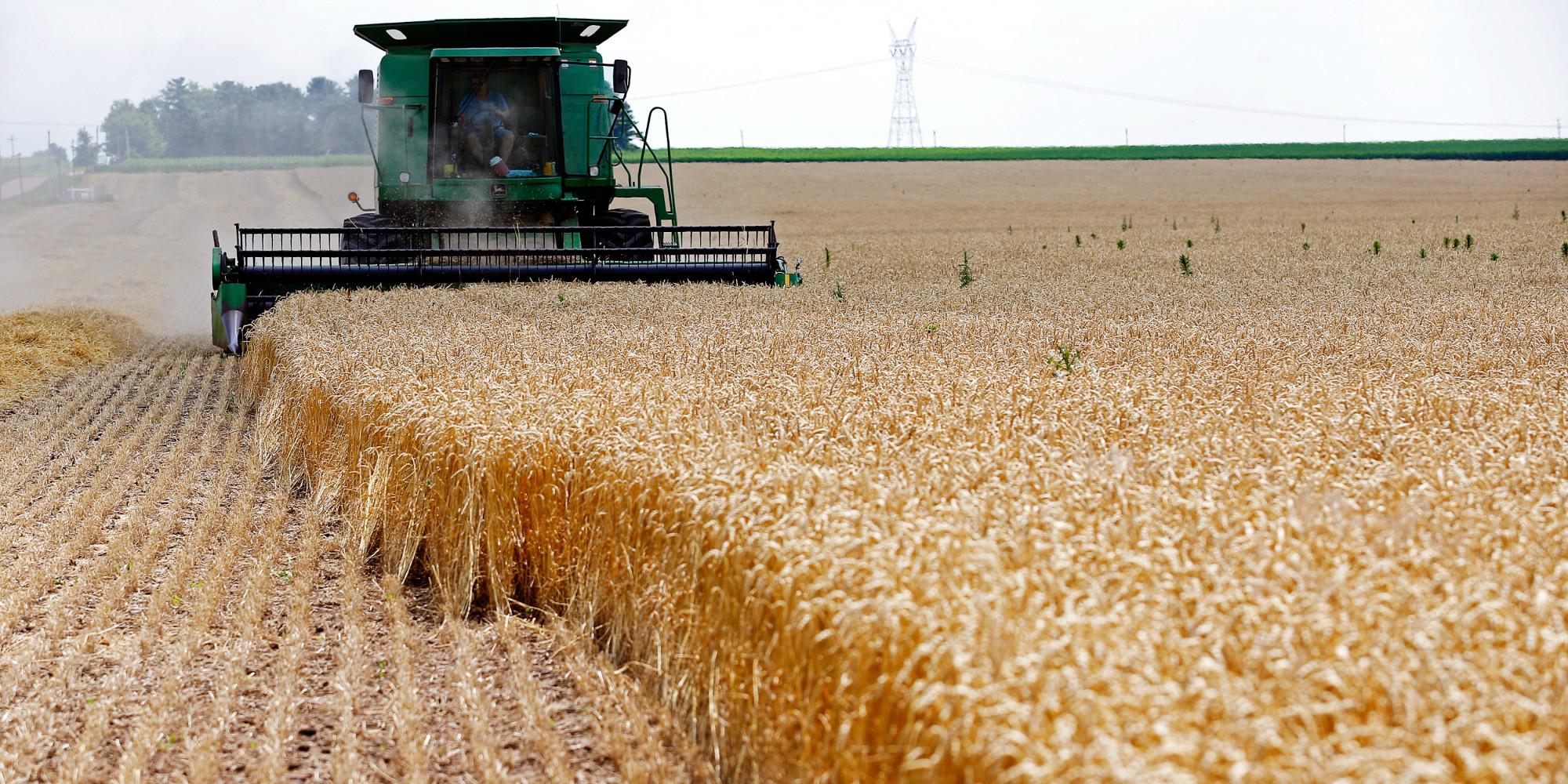 -حصص القمح الفرنسي في الجزائر تنهار
